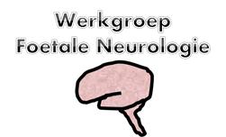 logo_werkgroep_foetale_neurolgoie.png